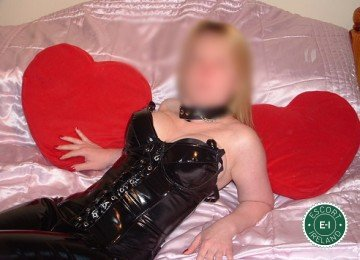 Book a meeting with Welsh Kinky Bunny in Longford Town today