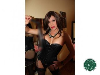 Meet the beautiful Vanessa TS in Dublin 6  with just one phone call